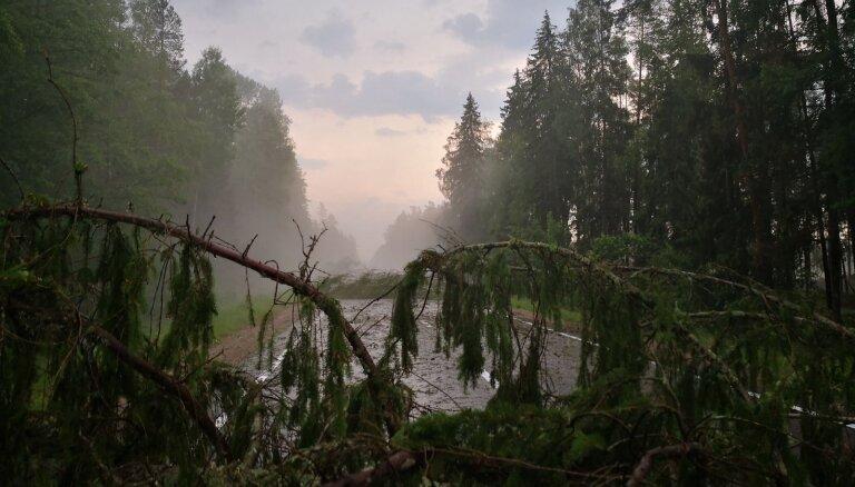 Negaisa nolauztos kokus Jelgavā sadalīs kā malku mazturīgajiem