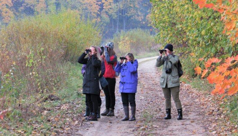 Putnu vērošanas dienās Eiropā redzēti vairāk nekā 5 miljoni putnu