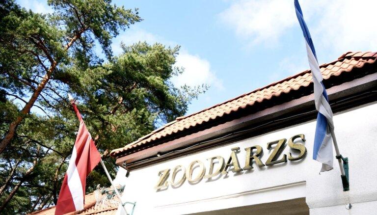 Rīgas zoodārzs pērn palielinājis apgrozījumu un atsācis pelnīt