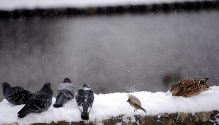 Trešdien vietām gaidāms slapjš sniegs