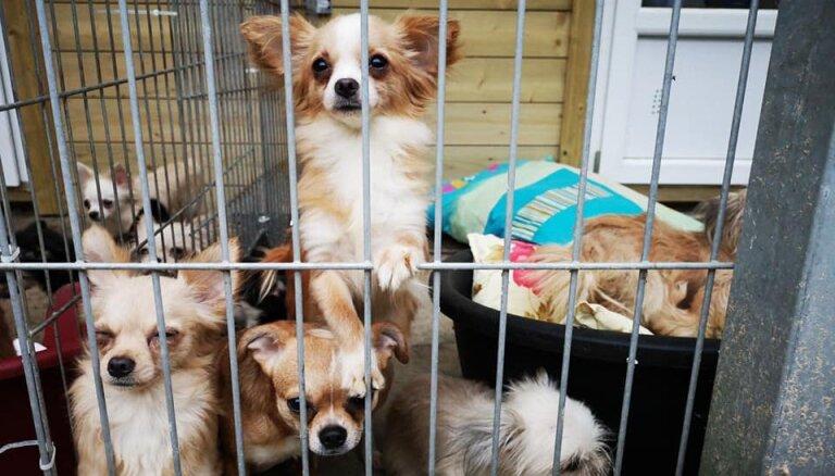 Drīzumā varēs adoptēt 57 no dzīvokļa Pārdaugavā izņemtos suņus