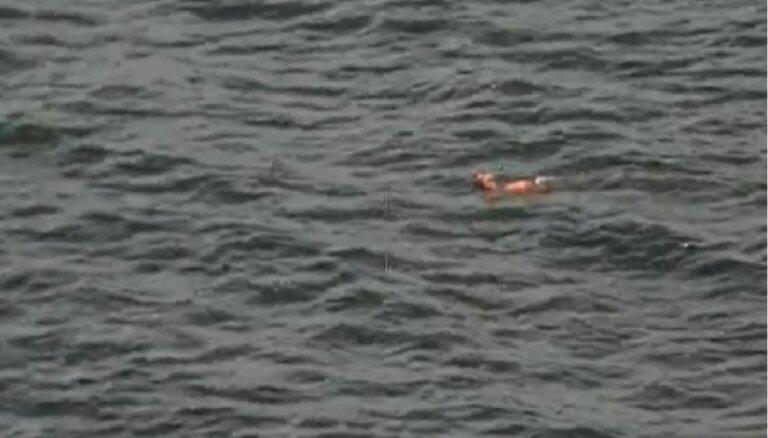 Īpašā glābšanas operācijā Skotijā no ūdens izvelk slīkstošu kokapū