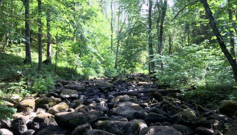 ФОТО. Чертова канава на речке Наружа — необычное место недалеко от Эргли
