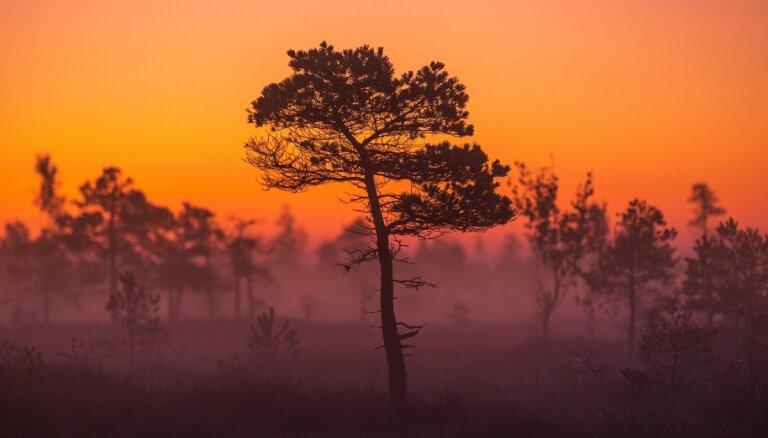 """Магические ФОТО: Прекрасное осеннее утро в Национальном парке """"Кемери"""""""