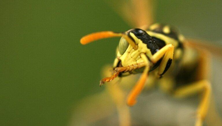 Slimnīcā nogādāti vairāki cilvēki ar spēcīgu alerģisku reakciju pēc kukaiņu dzēlieniem