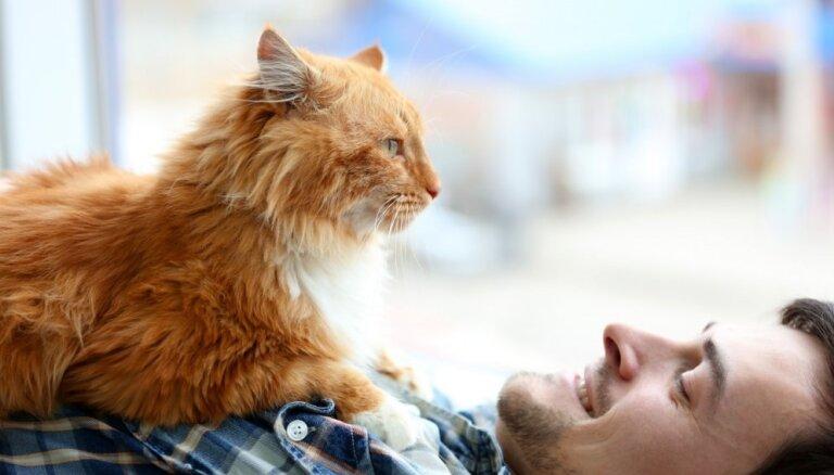 Кошачья любовь: как понять, что вы нравитесь кошке?
