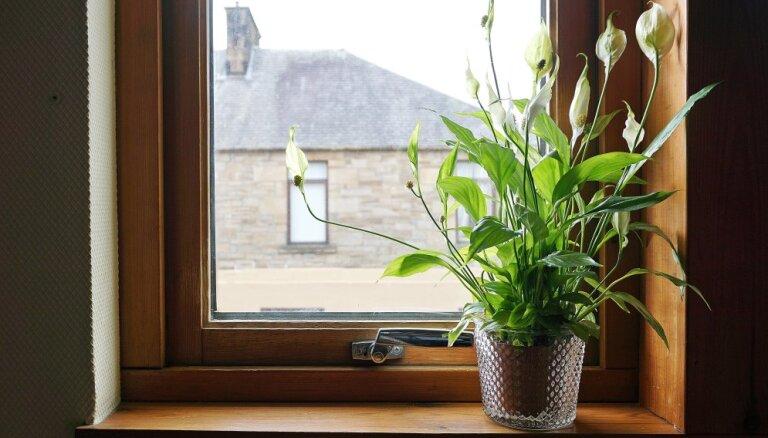 Зеленая бригада: 9 лучших растений для каждой комнаты (и еще три для балкона)