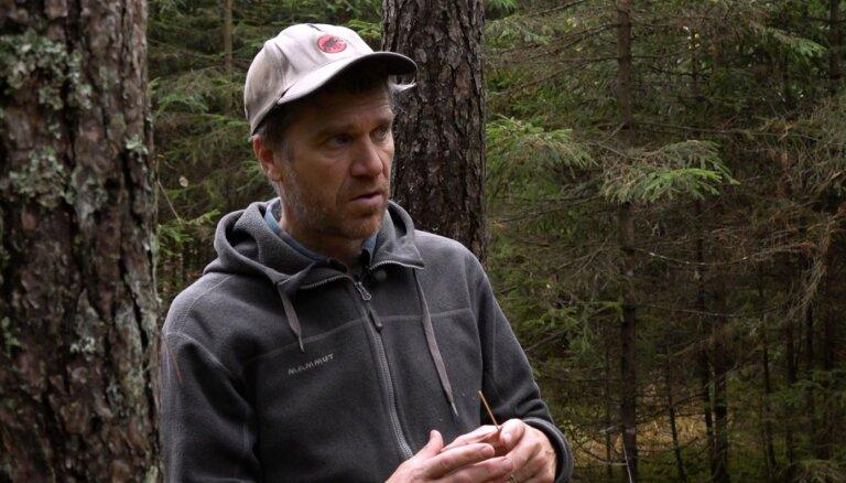Māris Olte rāda, kā mežā atrast vislabāko eglīti