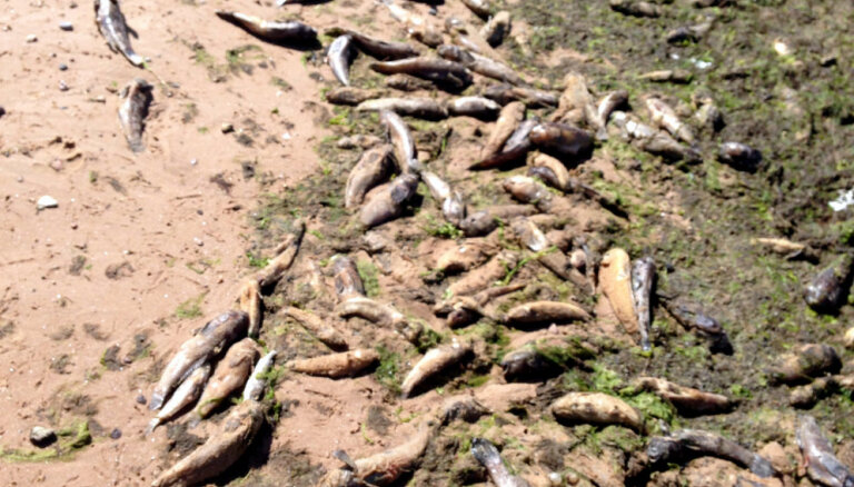 ФОТО: В Саулкрасты на берег моря выбросило тысячи мертвых бычков