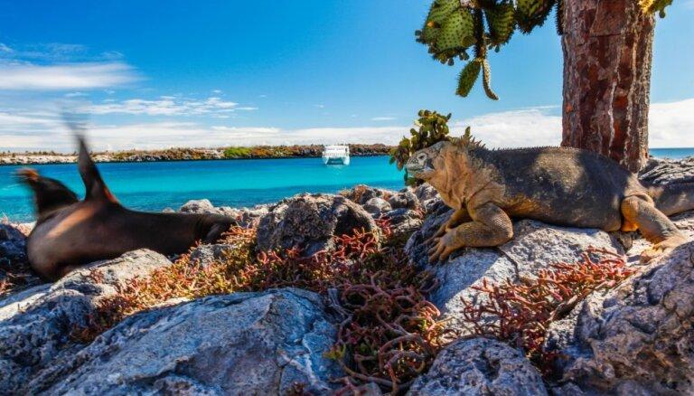 Galapagu salās aizliedz pirotehniku, lai pasargātu savvaļas dzīvniekus