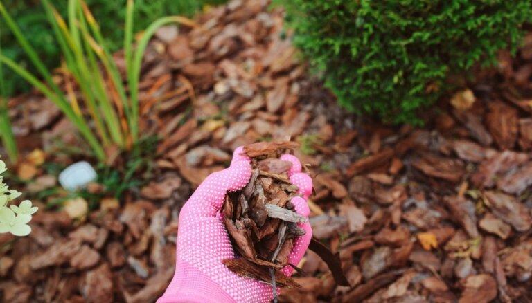 Augus neapbērt ar mulču! Speciālistes ieteikumi pareizai mulčēšanai pavasarī