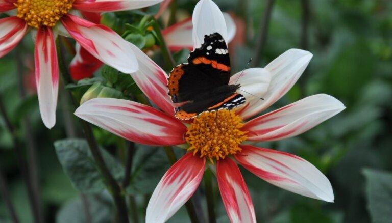 16. septembris – Vitamīnu diena Salaspils botāniskajā dārzā