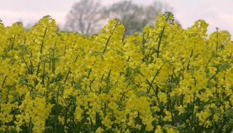 Крестьяне просят о помощи: вымерзли тысячи гектаров пшеницы и рапса