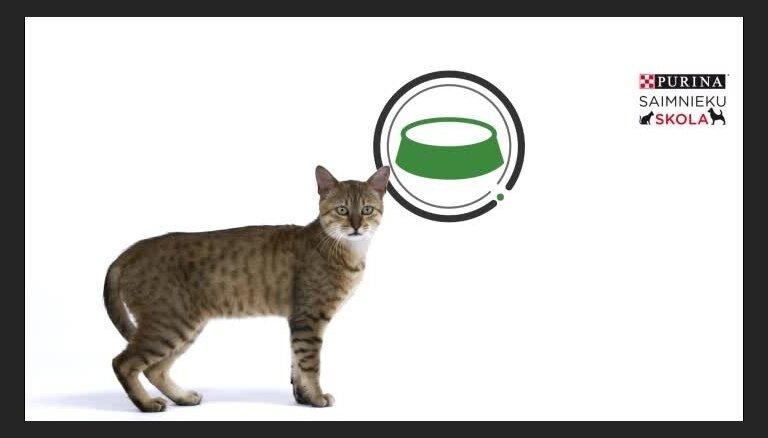 Kā rūpēties par kaķi, kam ir caureja