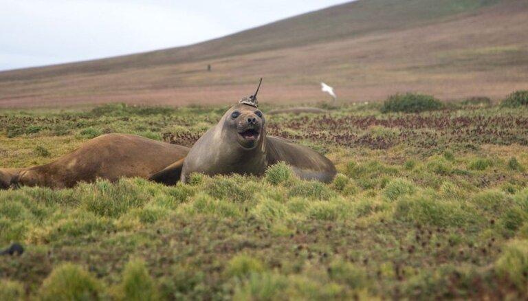Klimata pētīšanai 'rekrutē' ar amizantu antenas 'mici' aprīkotu roni