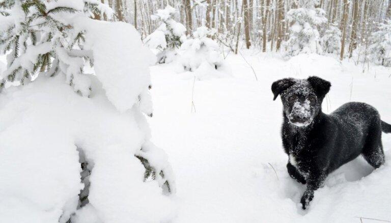 Gaisa temperatūra valstī no +3 grādiem Kurzemes piekrastē līdz -16 grādiem Latgalē