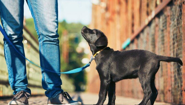 Suņu skola četrkājainajam mīlulim: piemērotākais laiks un ieguvumi