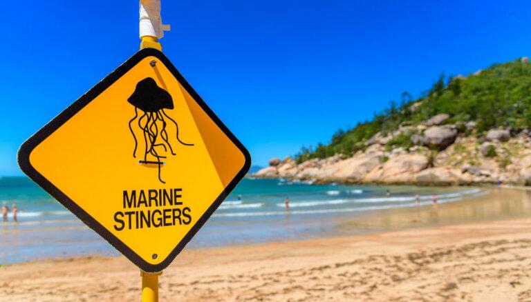 Ядовитые медузы атаковали австралийцев: пострадали 22 человека