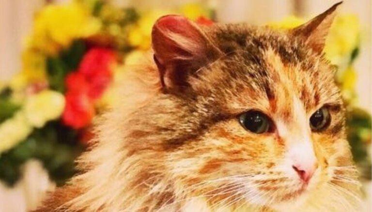 Skaisto kaķenīti atstāja salā – mājas meklē Zuze no Lielvārdes