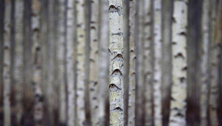 Gada pirmajā ceturksnī krietni pieaudzis meža produktu imports