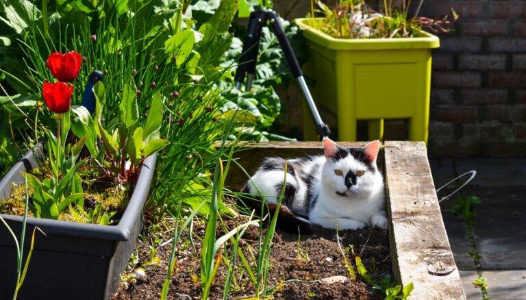Foto konkurss: Mans mājdzīvnieks – palīgs dārza darbos