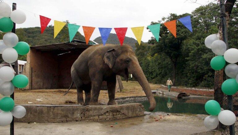 """""""Самого одинокого слона в мире"""" отправили в заповедник. Помогла певица Шер"""