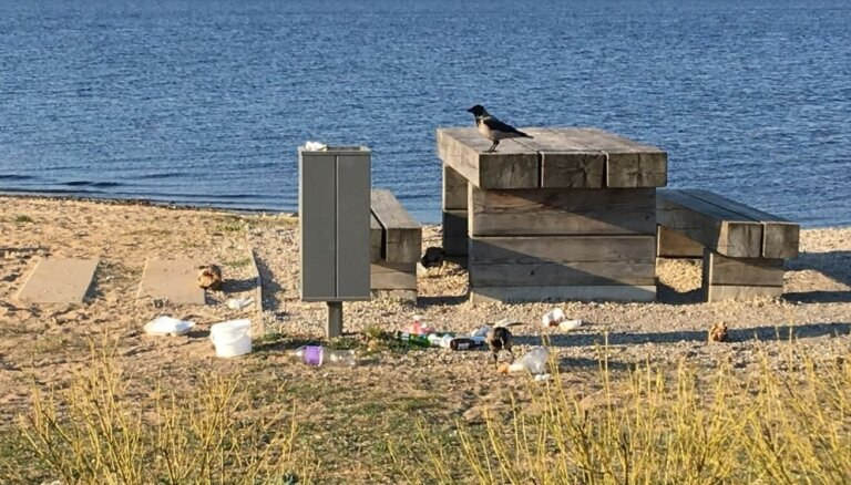 ФОТО: Вороны раскидывают мусор. Так тяжело поставить урны с крышками?