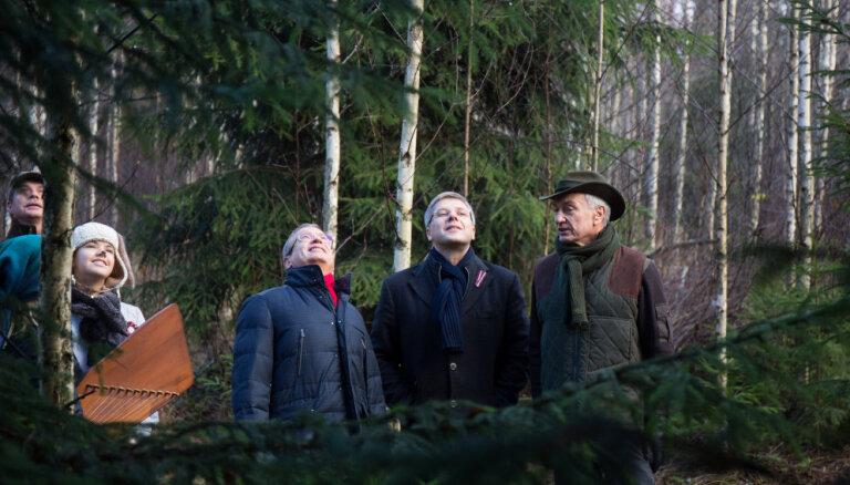 ФОТО: Выбраны главные рождественские елки Риги
