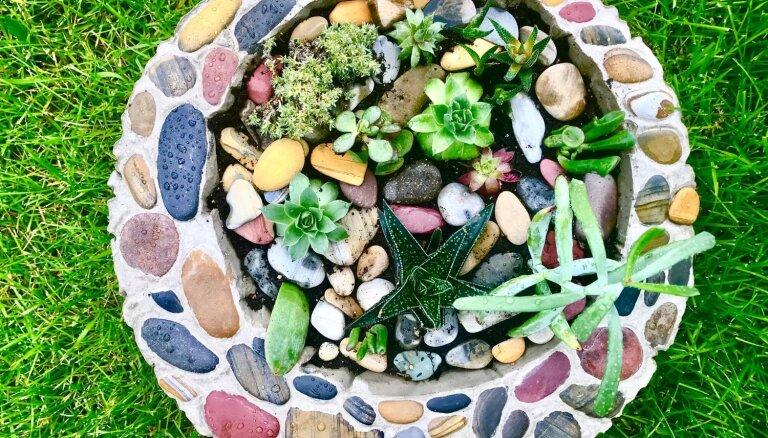 Dari pats: skaisti puķu podi no cementa maisījuma un akmentiņiem