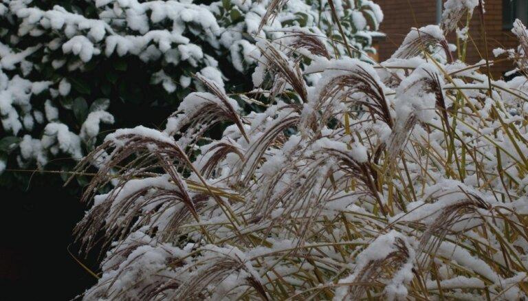 Skaists dārzs visos gadalaikos – ziemcietes, kas labi izskatās arī sniegotajā sezonā