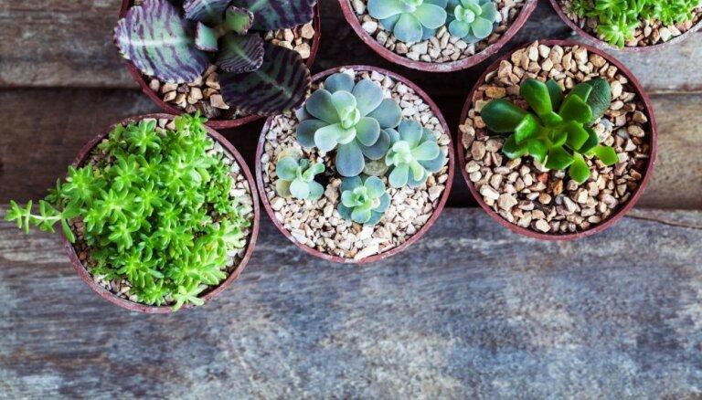 Почему суккуленты лучше обычных домашних растений