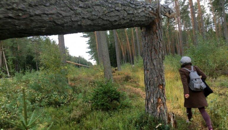 Nokrituša koka dēļ traucēta satiksme vilciena maršrutā Rīga – Skulte