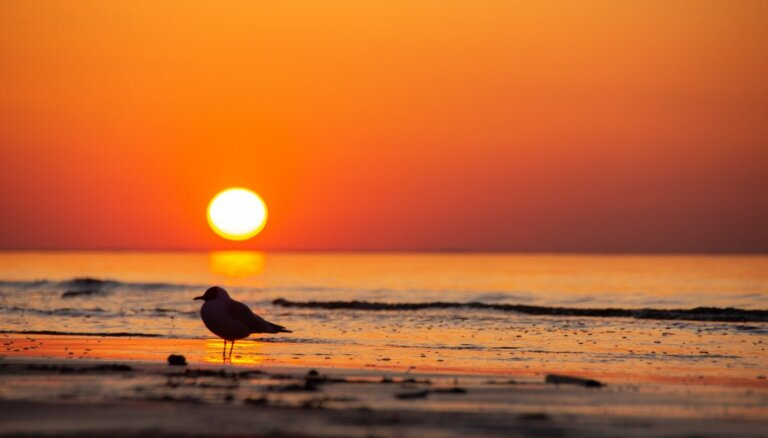 'Forbes' izceļ Jūrmalas pludmali kā drošu galamērķi Eiropā pēc pandēmijas