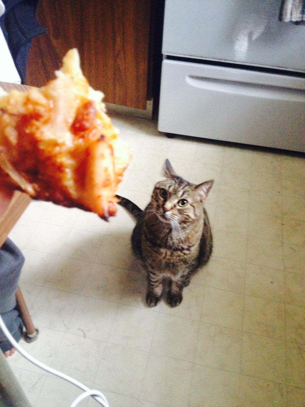 10 ФОТО животных, на которых идеально отражены твои взаимоотношения с едой