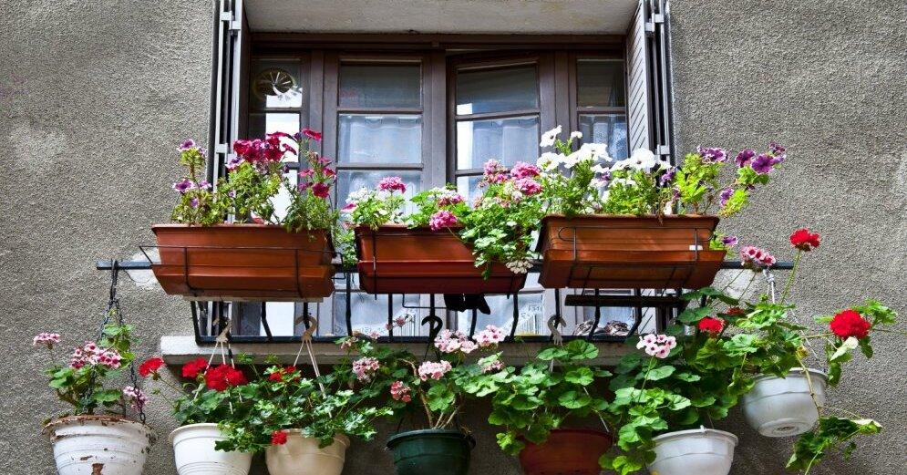 Что разводить на балконе