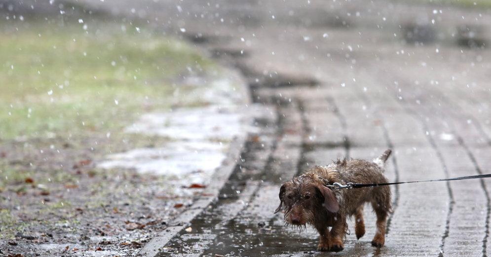 Погода в репьёвке воронежской области на 7 дней