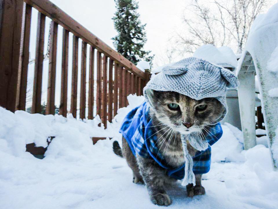 Мороз, уходи: 10 котиков, которые уже устали от этой зимы