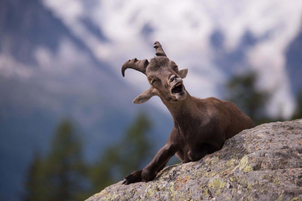 Выбраны самые смешные фотографии животных за 2015 год