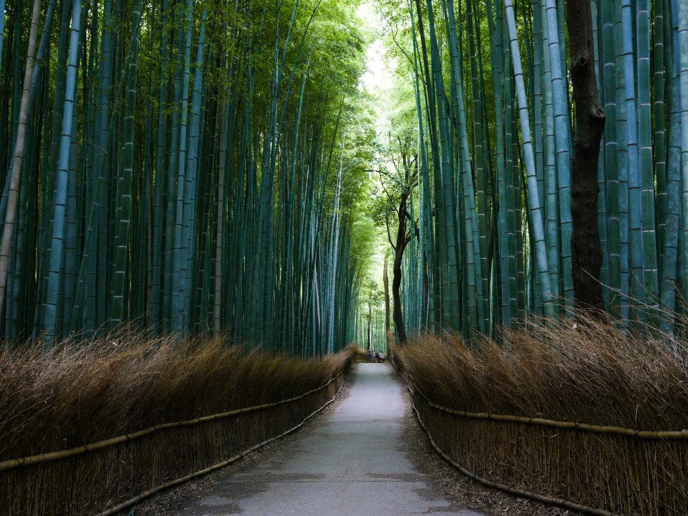 Skaistākās koku alejas pasaulē – kur tās atrodas?