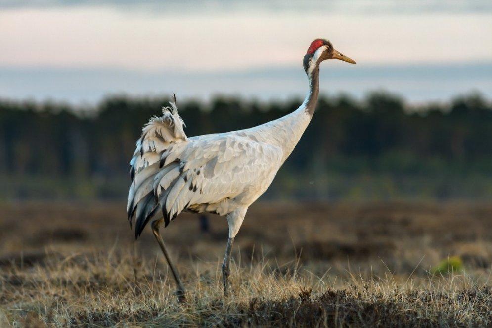 Sešas labākās putnu vērošanas vietas Latvijā