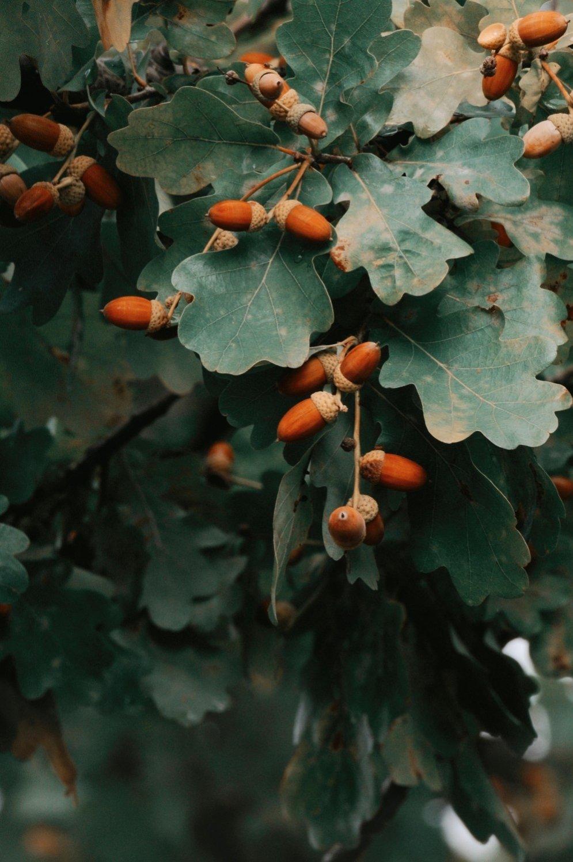 Meža veltes, kas noderēs dekorāciju veidošanā