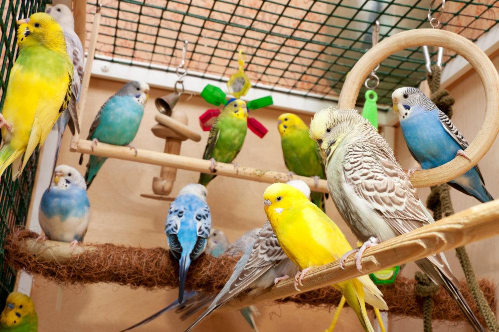 Уход для волнистых попугаев