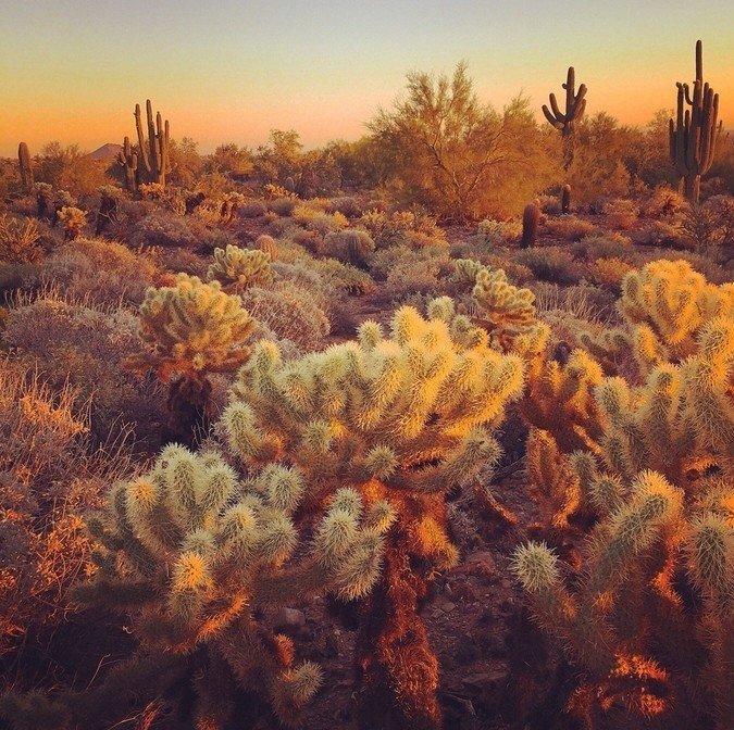 10 izcili skaistas fotogrāfijas, kas uzņemtas ar iPhone 6