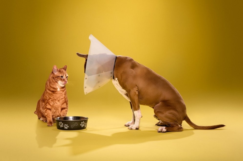 Nelaimīgi un nožēlojami purni: suņi ar kauna konusu ap kaklu