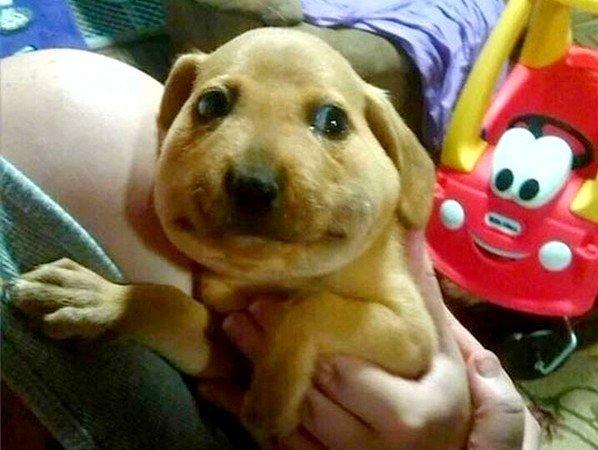 Kā pārvēršas suņa seja, ja viņam galvā iekož bite